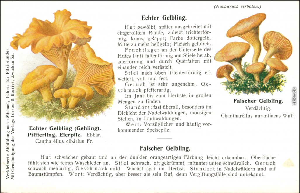 vintage Postcard from 1914: Pilze Gelbling::