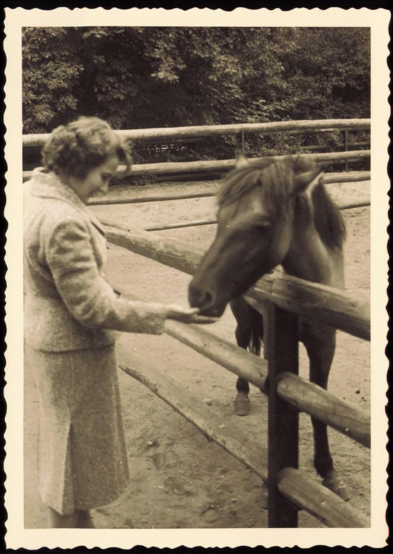 Pferd zoo frau Kostenlose Zoo
